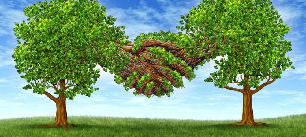 14489055 - business partnership growth success with two growing gree trees in the shape of two hands  hand shaking together as a financial symbol of agreement and contract between two companies or business men