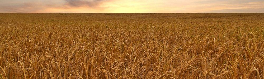 crop-hdr-1320499-1598x987